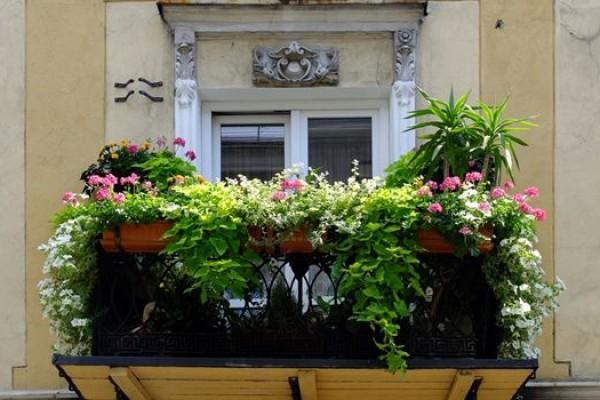 Czym więcej kwiatów tym lepiej - najładniej ukwiecony balkon!