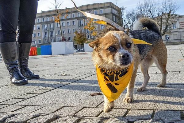 """Kolejna """"Psiechadzka"""" ! Tym razem spacerowali z psami ze schroniska w centrum miasta"""