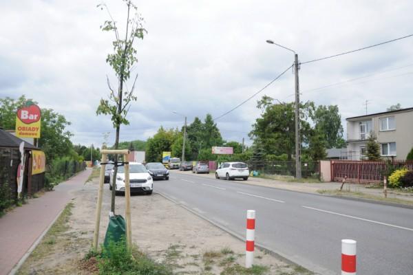 W Częstochowie nawadniają młode drzewa podczas suszy