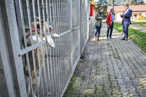 Prezydent Częstochowy odwiedził schronisko w Światowy Dzień Zwierząt